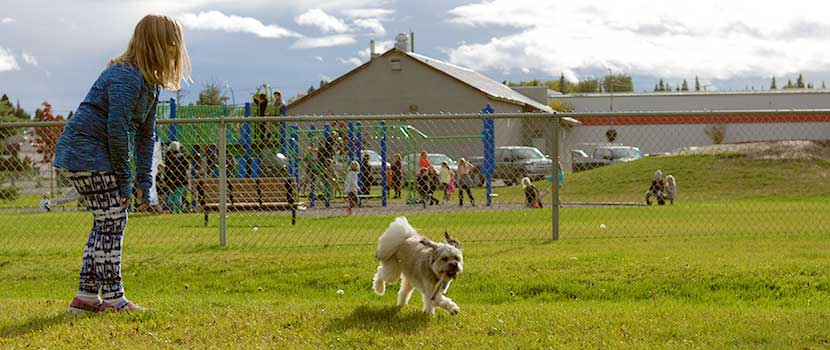 Corporal Darren Fitzpatrick Bravery Park has a fenced area for pets to run free.